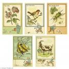 Tim und Struppi Set mit 5 Postkarten 1943